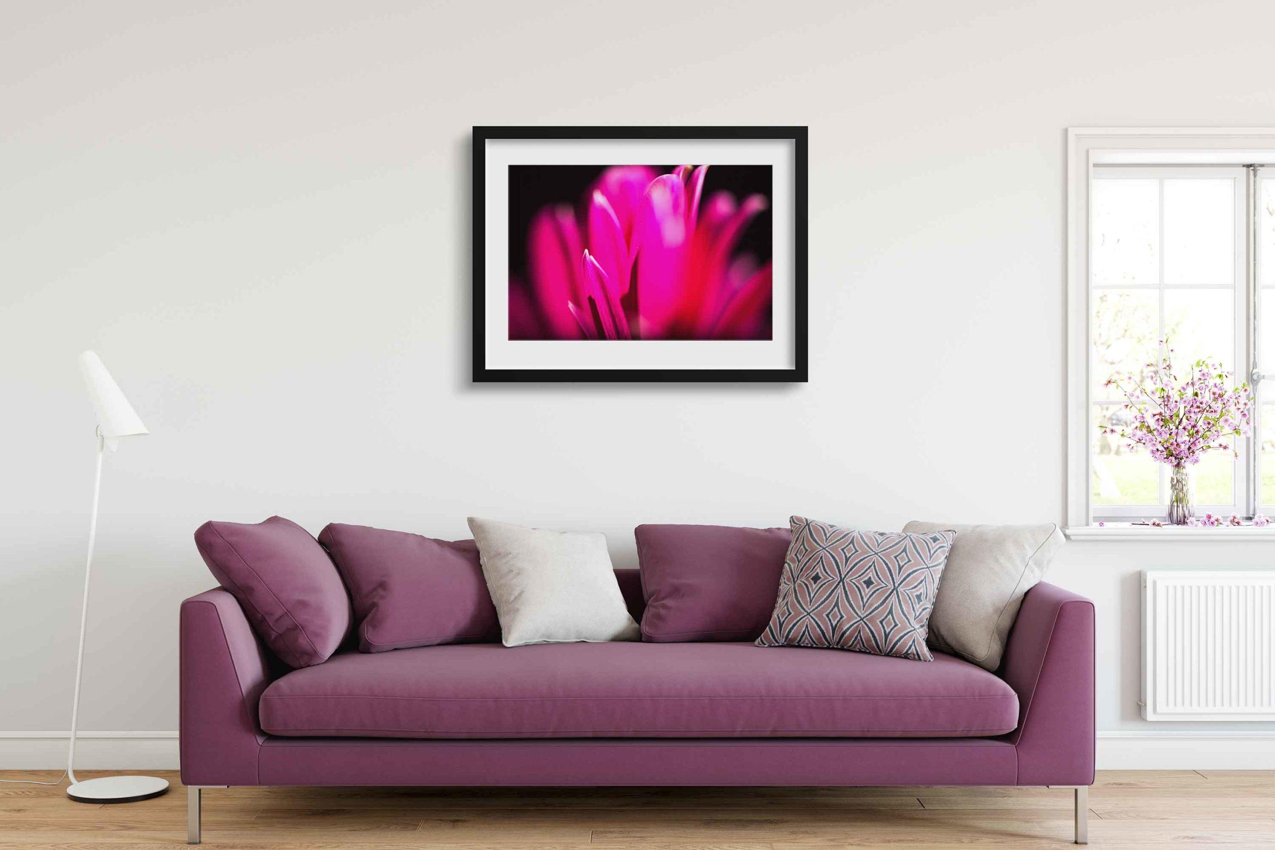 Flower, Plant, Bloom, Blossom, Fresh, Love, Romantic, Macro, Closeup, Detail, Cream, Pink