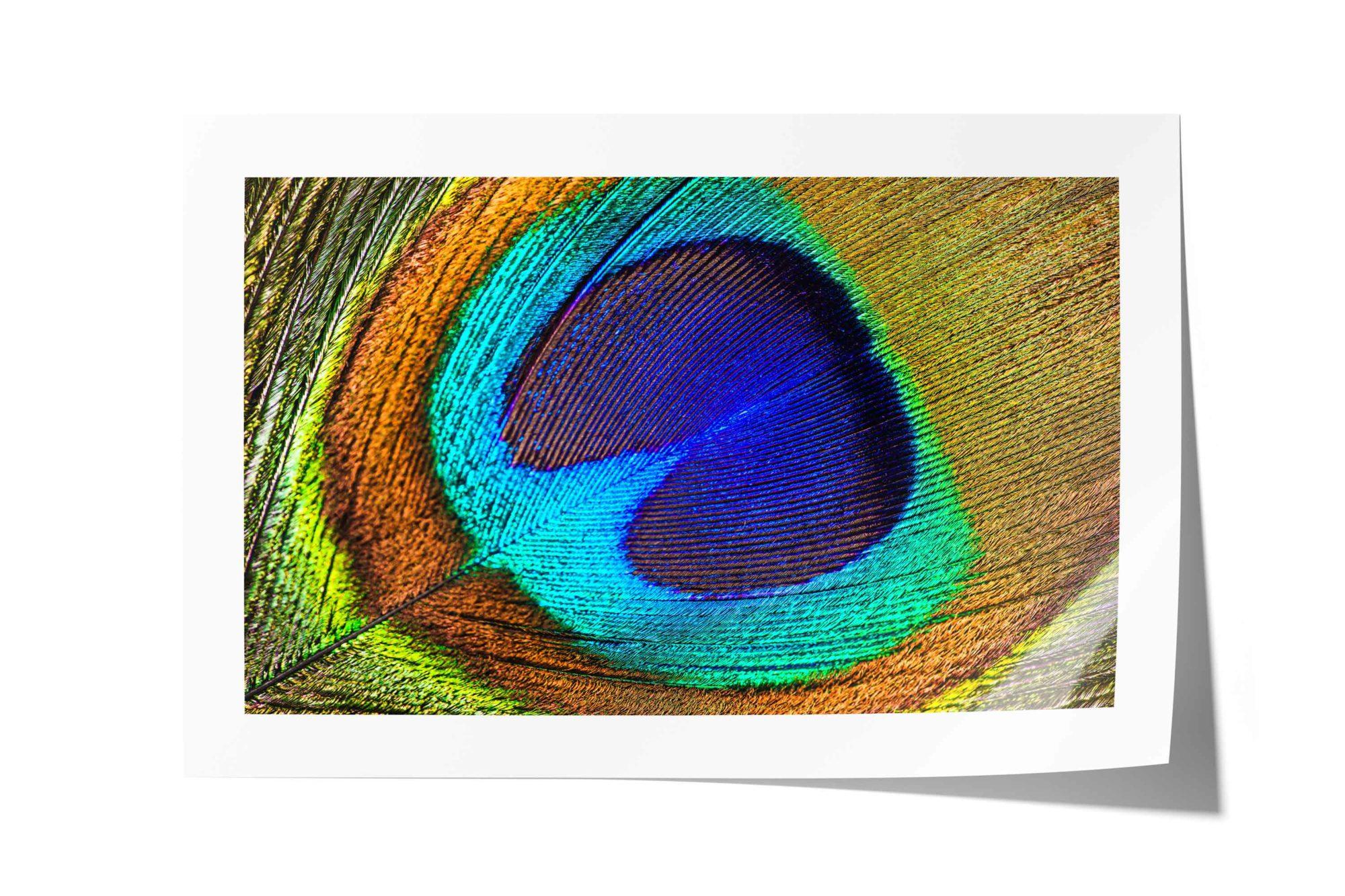 Peacock, Bird, Feather, Macro, Texture, Closeup, Color, Rainbow, Abstract, Detail