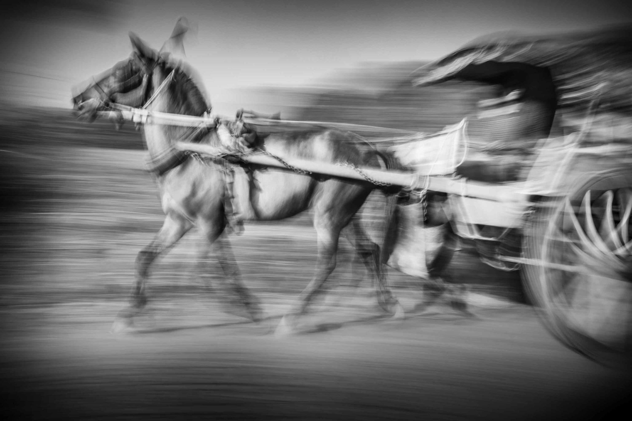 Horse, Mandalay Inwa, Myanmar (Burma)